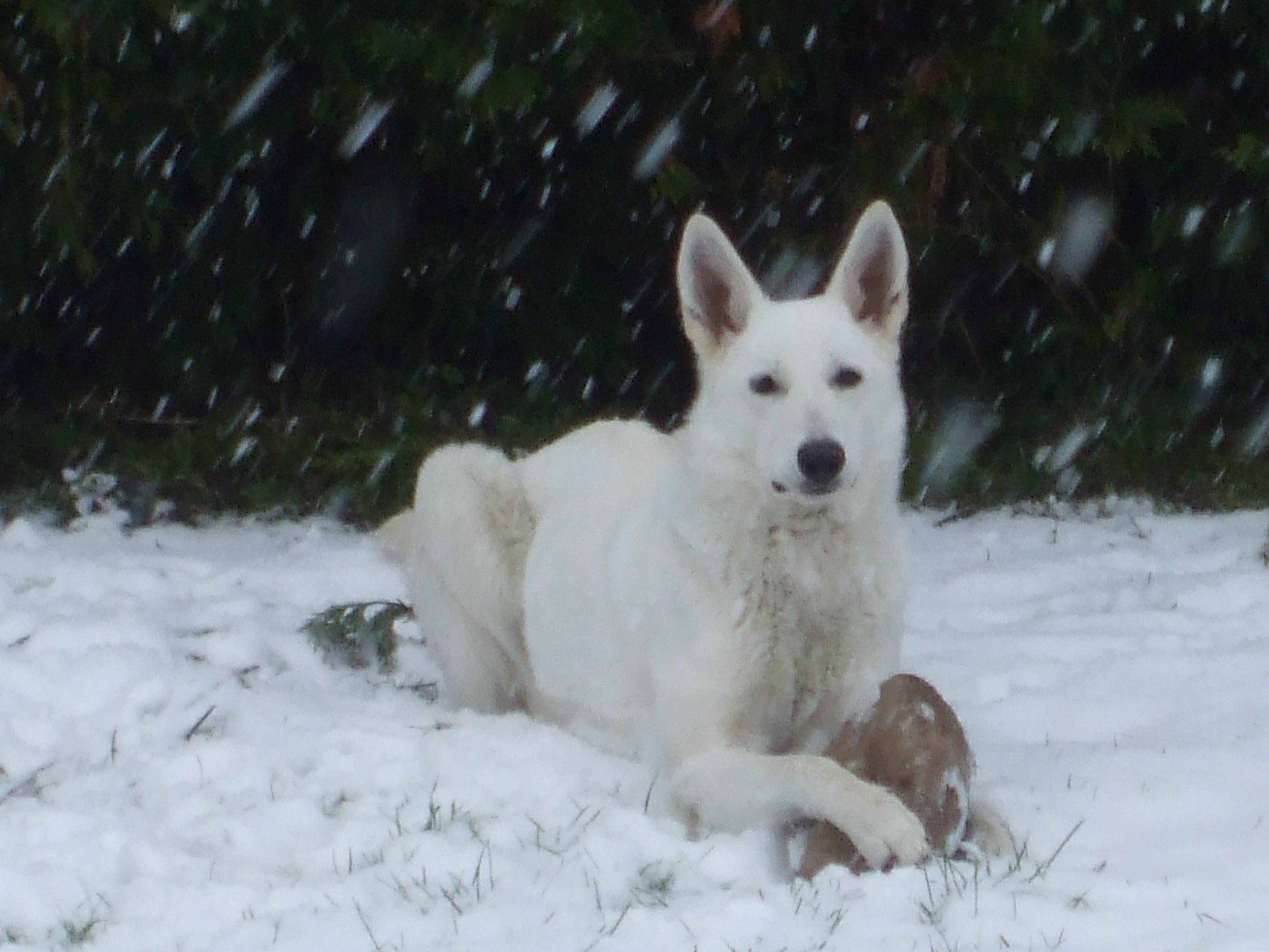 elle se confond presque dans la neige